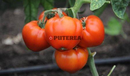 Mai multi bani pentru producatorii de legume cultivate in sere si solarii. Cat primesc in plus