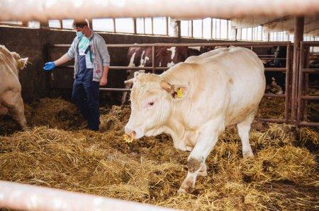 EXCLUSIV. Crescatorii de animale, dezinteresati total de primele de asigurare din PNDR 2020. Nicio cerere eligibila in trei ani