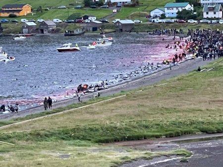 Revolta: peste 1400 de delfini ucisi in Insulele Feroe. <span style='background:#EDF514'>IMAGIN</span>ile cu ape pline de sange au provocat reactii puternice