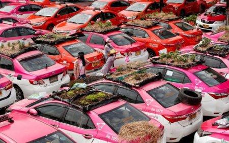 GALERIE FOTO Taxiurile Covid au devenit gradini de legume in Bangkok