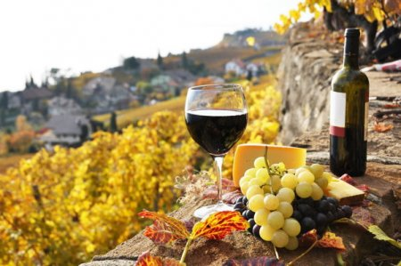 Antreprenori locali. Virgil Harabagiu: Investim 1,2 mil. euro in turismul viticol la Dealu Mare. Turismul viticol este viitorul. Se poate dezvolta cu investitii in infrastructura de cazare