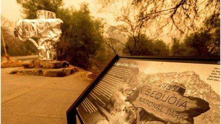 Cel mai mare copac din lume a fost invelit in folie termoizolanta pentru a fi protejat de incendiile care fac ravagii in California