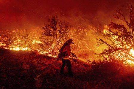 Pompierii din California invelesc cu staniol arborii seculari dintr-un parc national. Incendiile de <span style='background:#EDF514'>VEGETATIE</span> ard de mai bine de o saptamana