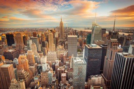 Dezastru ecologic in New York! Sute de pasari au fost gasite moarte pe strazi