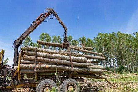 Garda Forestiera Suceava spune ca nu a gasit nereguli pe fondul forestier unde au fost agresati un activist si doi jurnalisti