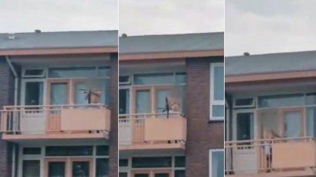 Doi morti si un ranit, dupa ce un barbat a tras cu arbaleta de la <span style='background:#EDF514'>BALCON</span> intr-un oras din Olanda