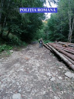 Garda Forestiera: Nu au fost identificate taieri ilegale pe fondul forestier unde au fost agresati activistul si cei doi jurnalisti