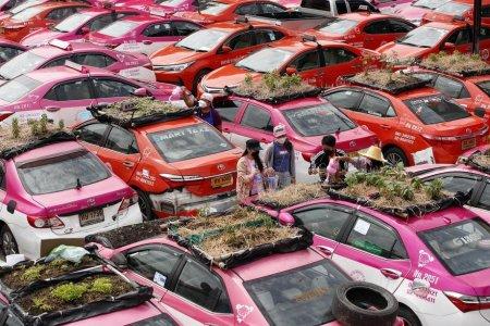 Idei de afaceri: Taxiurile abandonate din Thailanda au devenit gradini de legume