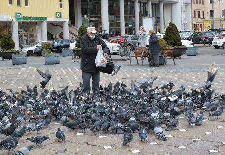 Numarul <span style='background:#EDF514'>PORUMB</span>eilor creste in Bucuresti. Ornitolog: vina e a noastra, pentru le dam de mancare