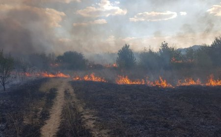 Incendiu la Hipodromul din parcul Nicolae Romanescu din Craiova. Ard 5 hectare de <span style='background:#EDF514'>VEGETATIE</span>