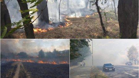 Incendiu de <span style='background:#EDF514'>VEGETATIE</span> in Parcul Nicolae Romanescu din Craiova