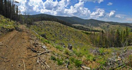 Șeful Garzii Forestiere Suceava a facut o gafa fara precedent. Ce poza i-a trimis unui activist de mediu