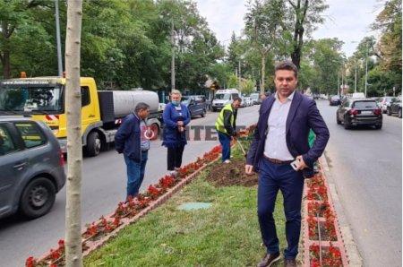 Mica impadurire: Cel putin 1.500 de arbori, plantati intr-un sector al Capitalei