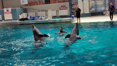 Delfinul Chen-Chen, suspect de coronavirus. Spectacolele de la Delfinariul din Constanta au fost suspendate