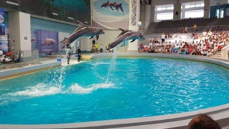 Situatie controversata la Constanta. Delfinul Chen-Chen e suspect de COVID. Toate spectacolele au fost suspendate