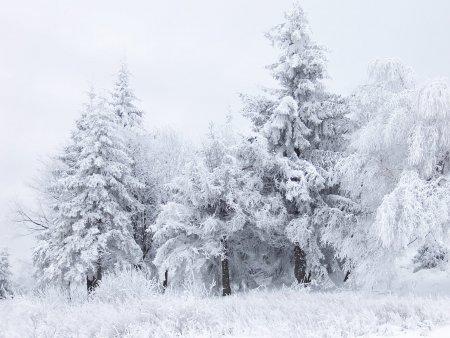 Vine iarna in Romania! O vreme cumplita loveste intreaga tara. Alerta meteo ANM