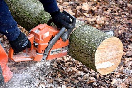 Reducerea TVA la lemnele de foc, avizata favorabil in Comisia de Buget - Finante din Senat