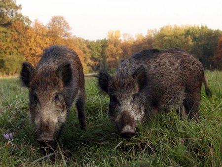 Vesti bune: Covid a redus consumul de animale salbatice in <span style='background:#EDF514'>ASIA</span>
