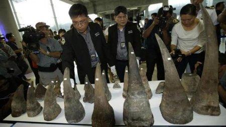 Indienii au ars 2.500 de coarne de rinocer confiscate de braconieri