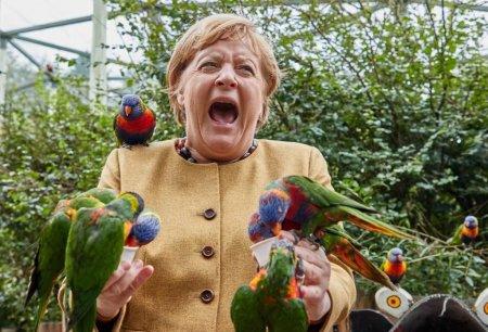 Imaginea zilei: Angela Merkel, ciupita de papagali in timpul unei vizite la parcul de pasari din Marlow
