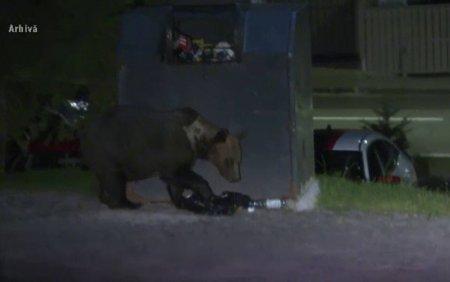 Un barbat din Comarnic, in stare <span style='background:#EDF514'>GRAV</span>a. A fost atacat de un urs chiar in curtea sa