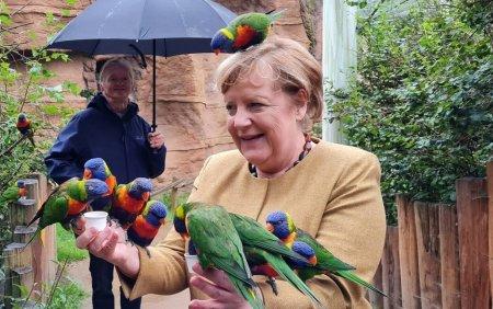 Angela Merkel, <span style='background:#EDF514'>ATACATA</span> de papagali in ultimele sale zile de mandat. Niciun animal sau cancelar nu a fost ranit