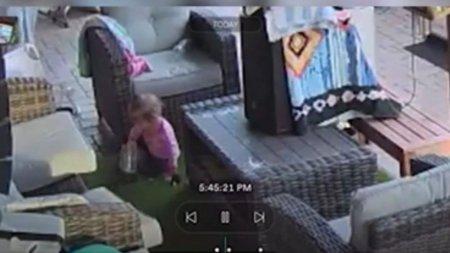 Un tata a fost socat sa descopere ca fiica lui de 18 luni se juca cu o tarantula