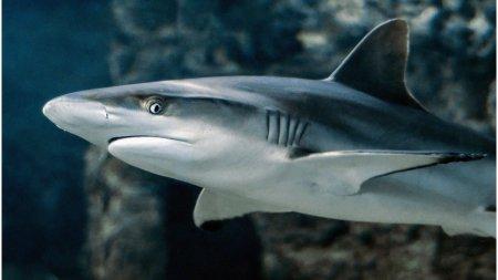 Autoritatile din Columbia au confiscat aproape 3.500 de aripioare de rechin