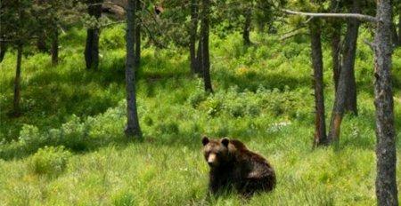 Un barbat a fost atacat de urs chiar in spatele casei, in Prahova. Cainii sai l-au salvat: Va ramane mutilat pe tot restul vietii