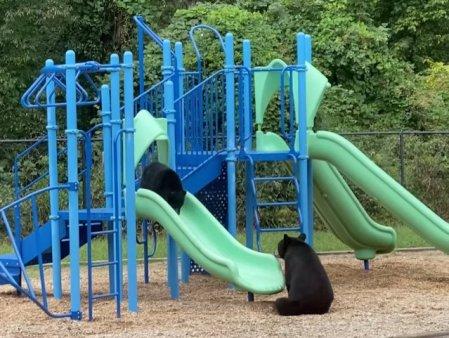 O ursoaica isi invata puiul sa se dea pe tobogan, intr-un video viral