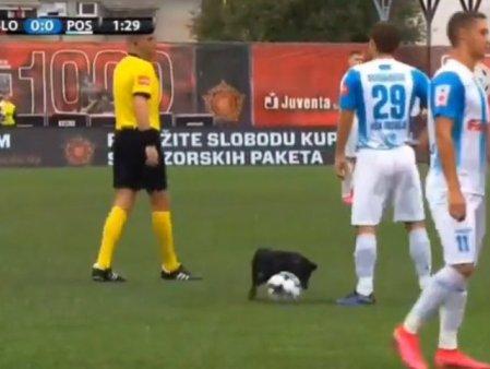 Un caine a intrerupt un meci de fotbal. Dognaldo a furat mingea, intr-un video viral pe Twitter