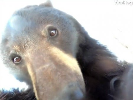 Un urs curios gaseste o camera GoPro pierduta in zapada. Ce a urmat, intr-un video viral