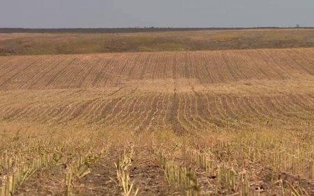 Seceta din acest an a afectat culturile agricole si pasunile. Fermierii nu mai au cu ce sa-si hraneasca animalele
