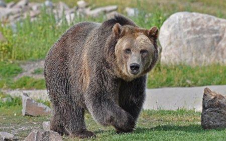 Un barbat a fost atacat de urs la Breaza. E al doilea atac in 24 de ore in Prahova