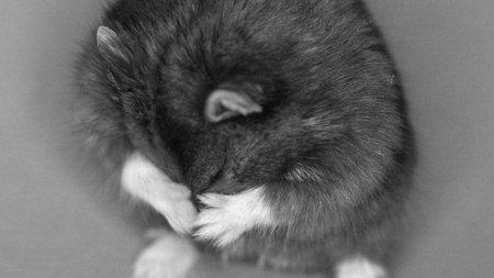 Faceti cunostinta cu Goxx, hamsterul care joaca la bursa cripto-monede si avut un randament mai bun decat titlurile companiei lui <span style='background:#EDF514'>WARREN</span> Buffet