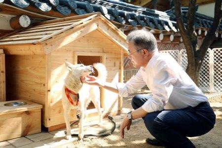 Presedintele Coreei de Sud sugereaza ca tara ar trebui sa renunte la carnea de caine