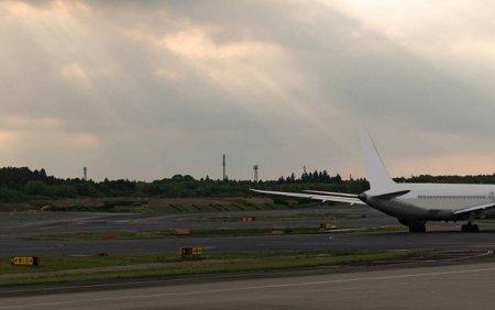 O broasca testoasa a generat haosul pe un aeroport din Japonia. Cinci <span style='background:#EDF514'>ZBORURI</span> au fost amanate