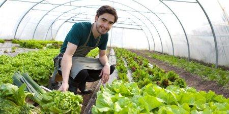 Primele de asigurare a culturilor si instalarea tinerilor fermieri, in topul solicitarilor la AFIR