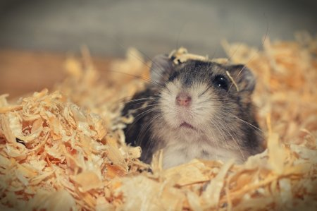 Mr. Goxx hamsterul are mai mult succes pe criptomonede decat investitori de renume
