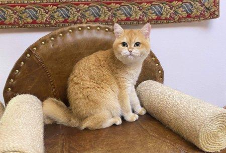 Pentru <span style='background:#EDF514'>IUBITO</span>rii de pisici: care sunt regulile de indeplinit pentru a infiinta o felisa?