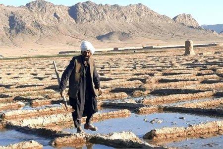 Afacerea ilegala de miliarde de dolari din Afganistan la care talibanii promit sa renunte. Nimeni nu ii crede