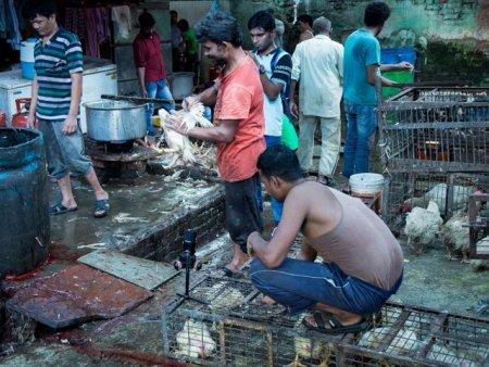 VIDEO Cruzime in pietele din India: animale vii sacrificate fara mila si fara igiena