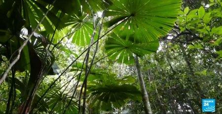 Incredibil: Cui a fost retrocedata cea mai veche padure tropicala din lume