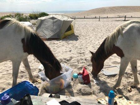 <span style='background:#EDF514'>GALERIE</span> FOTO Insula unde caii salbatici fura mancare de la turisti