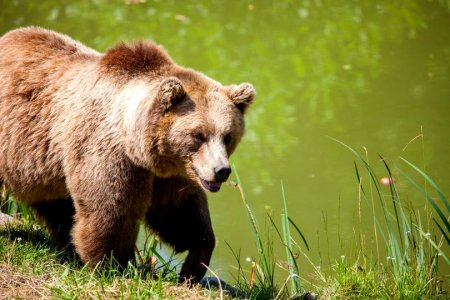 Cum a ajuns Romania cel mai mare exportator de trofee din Europa si cati ursi se vaneaza de fapt – Raport