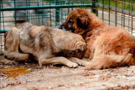 De Ziua Internationala a animalelor, mai multe organizatii cer oprirea eutanasierii cainilor