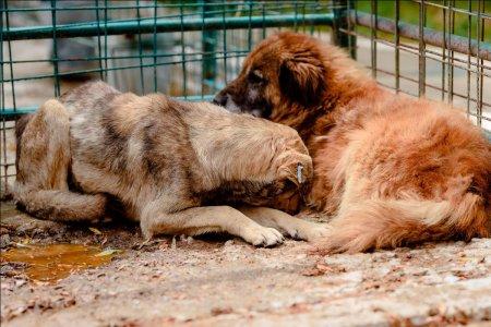 Peste 30 de organizatii pentru protectia animalelor cer oprirea urgenta a eutanasierii cainilor din Romania