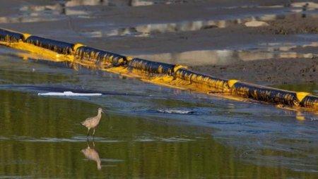 Dezastru ecologic in California: o scurgere de petrol a ucis sute de pesti si de pasari