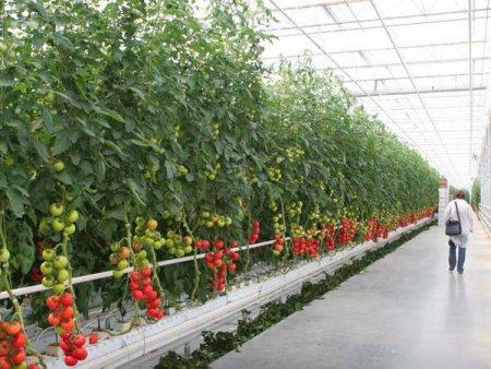 Agropower. Un <span style='background:#EDF514'>SOLAR</span> de legume, o crescatorie de vite sau o cultura de fructe de padure sunt afaceri care pot porni cu pana in 50.000 de euro, dar orice antreprenor trebuie sa aiba in plus in buzunar circa 3.000 de euro pentru cheltuieli neprevazute