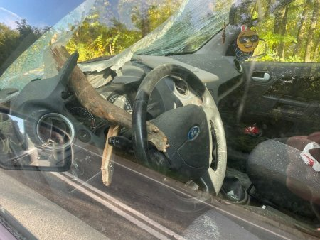 Un copac s-a prabusit peste un autoturism pe Drumul European 581. O bucata de lemn a strapuns parbrizul, ranind soferul